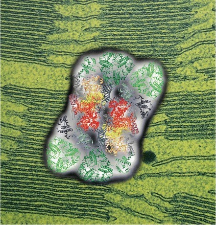 PhilTransRoySoc: Catch up on thylakoids with this special issue | Plant Gene Seeker -PGS | Scoop.it