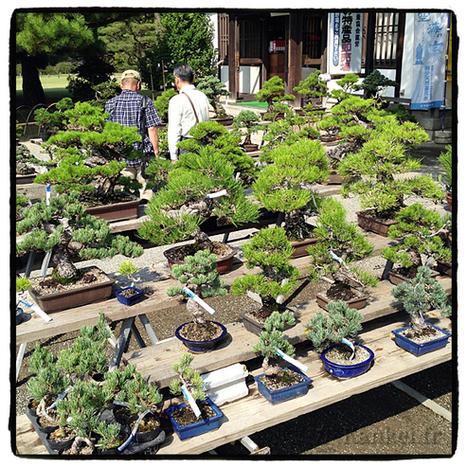 Takamatsu, la ville des bonsaïs | What makes Japan unique | Scoop.it