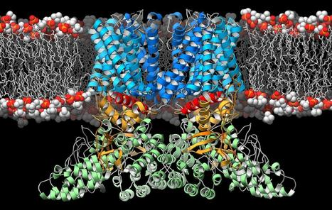 TSRI scientists solve 3-D structure of protein that guides the immune system | Immunology for University Students | Scoop.it