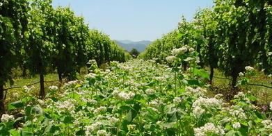 What's in your bottle? - New Zealand Herald | 'Winebanter' | Scoop.it