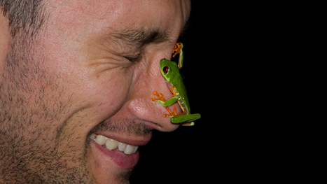 The race to get rainforest frogs into Noah's ark | Amazing Science | Scoop.it