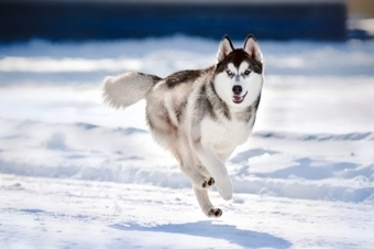 Dog Care in Winter: Keeping Your Best Friend Cozy and Healthy | Pets | Scoop.it