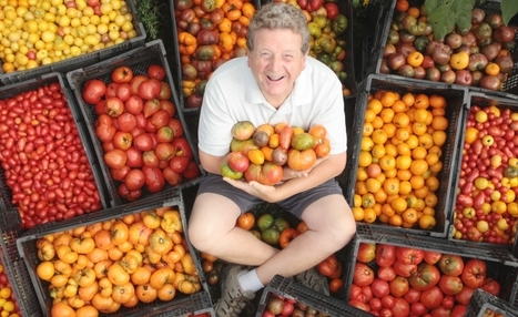 Rise of the mutant (and tasteless) tomato | Sustainability: Permaculture, Organic Gardening & Farming, Homesteading, Tools & Implements | Scoop.it