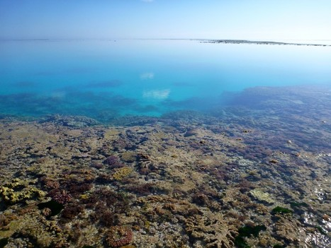"""Ocean Acidification Is Slowing Coral Reef Growth (""""not too much due to overfishing and pollution"""") 