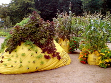 What the Heck are Bag Gardens? | Organic Gardening, Farming, Lawncare, Landscaping & Eating :) | Scoop.it