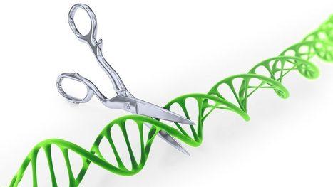 Dramatic twists could upend patent battle over CRISPR genome-editing method | Intellectual Property - Propriété intellectuelle | Scoop.it