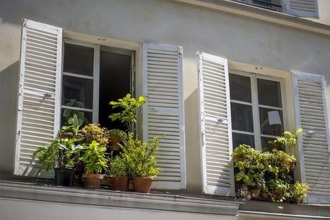 « Des graines à tous les étages » pour végétaliser Paris | Economie Responsable et Consommation Collaborative | Scoop.it