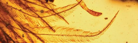 """Dinosaur"" in Amber: Evolutionists Spin Another Tail 