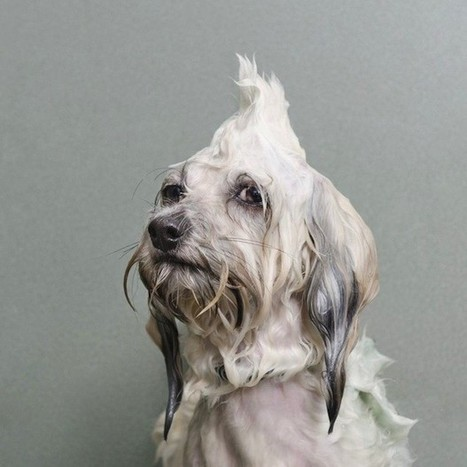 "Humor: Portraits of Wet Dogs Taken Mid-Bath | ""Cameras, Camcorders, Pictures, HDR, Gadgets, Films, Movies, Landscapes"" 