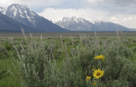 Wyoming sells land in Grand Teton National Park to feds for $46M | Timberland Investment | Scoop.it