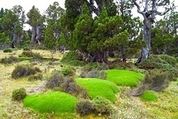 World heritage forests burn as global tragedy unfolds in Tasmania | Geography | Scoop.it