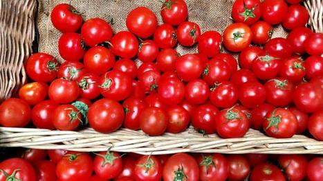 Nouvelle ère pour l'agriculture bio en France | Nouveaux paradigmes | Scoop.it
