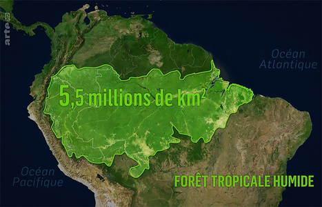 Foret Amazonienne Carte | Carte