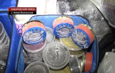Le caviar était caché ... dans le cercueil - Francetv info | Caviar de Neuvic | Scoop.it