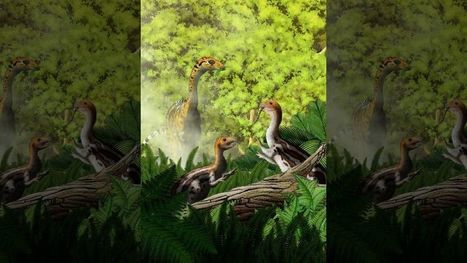 Weird dinosaur species had teeth only in youth | Strange days indeed... | Scoop.it