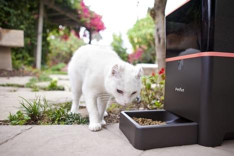 Best Automatic Cat Feeder Reviews Mar/2017 | Buyeru0027s Guide