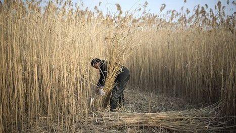 Greenpeace dénonce la pollution des sols en Chine | Toxique, soyons vigilant ! | Scoop.it