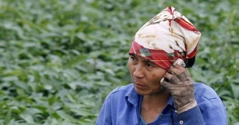 Can mobile phones help to improve food security? | Tech in agriculture | Scoop.it