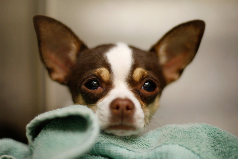 More Kids Helping Animals – Nick News | Linda Ellerbee | Nick.com | Animals R Us | Scoop.it