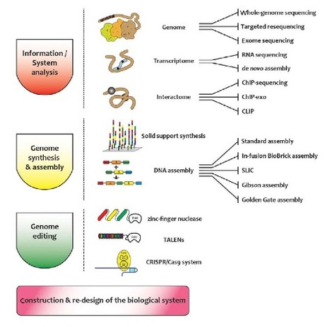 Emerging tools for synthetic genome design | Viruses and Bioinformatics from Virology.uvic.ca | Scoop.it