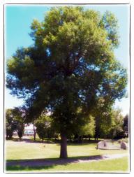Il ne faut plus abattre les arbres du parc Morgan | The Blog's Revue by OlivierSC | Scoop.it