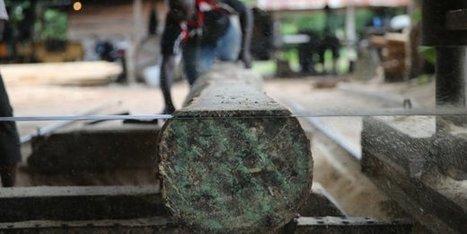 Afrique de l'Ouest : la menace cachée des crimes environnementaux | Confidences Canopéennes | Scoop.it