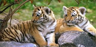 Golden Triangle Tiger Tour packages