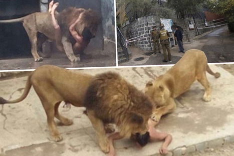 Naked man jumps into a zoo's LION enclosure in desperate 'suicide bid' and survives | Xposed | Scoop.it
