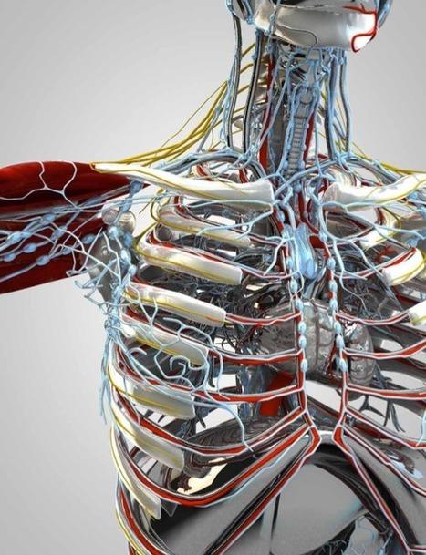 My Amazing Human Body 1.2
