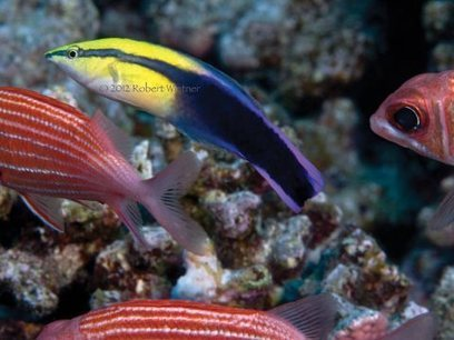 The dark side of Hawaii's aquarium trade | All about water, the oceans, environmental issues | Scoop.it