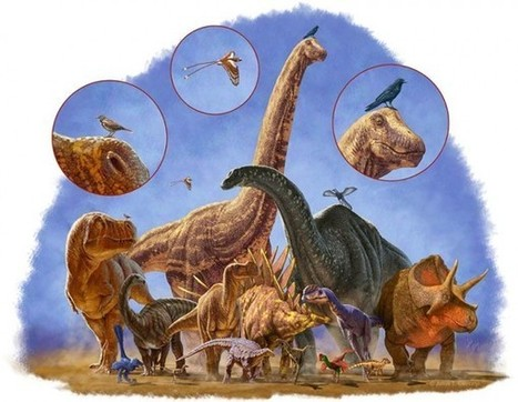 How Birds Survived the Dinosaur Apocalypse | Science and Technology Today | Scoop.it