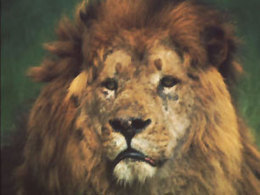 BBC - Religion: Rastafari   Walkerteach Geo   Scoop.it