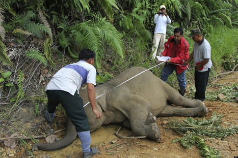 More Endangered Elephants Found Dead | Nature Animals humankind | Scoop.it