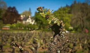 Francis Ford Coppola restoring Inglenook's legacy | Vitabella Wine Daily Gossip | Scoop.it