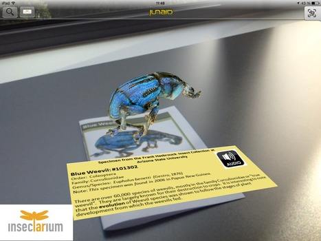 InsectARium - Beyond a Bug in a Box | Socialnetducation | Scoop.it