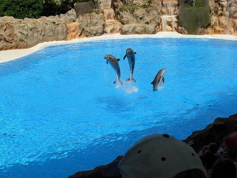 Six Flags Discovery Kingdom to Get Extraordinary Cirque Dreams Dolphin Show in 2013 | Amusement Parks | Scoop.it