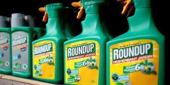 Glyphosate: les collectivités qui se passent de l'herbicide