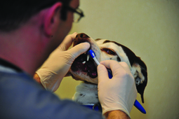 Dental Health Is Vital to Your Pet's Well-being | MagCast Articles | Scoop.it