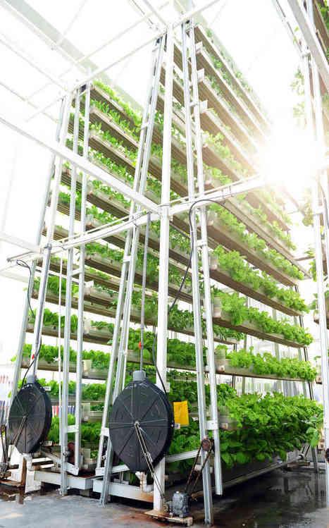 Vertical Farming vs. Farming Vertically - Vertical Food Blog | Vertical Aquaponics | Scoop.it