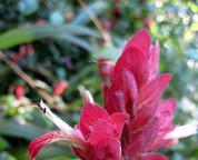 Patti Winters - Orlando Gardening Scene Examiner - Gardening | Examiner.com | Annie Haven | Haven Brand | Scoop.it