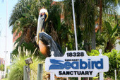 Injured Cruise Ship Pelican Coming to the Seabird Sanctuary | Clearwater Beach Florida | Scoop.it