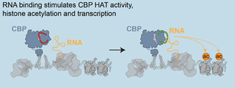 """""""Mysterious"""" Non-protein-coding RNAs Play Important Roles In Gene Expression 