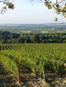 Dossier > Les vins de chinon | AOC Chinon et Vins de loire | Scoop.it