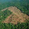 La déforestation et la biodiversité