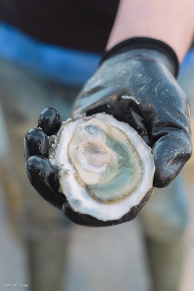 Loire Vallee Magazine - les huîtres de la Charente-Maritime - 03/01/17