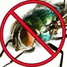 Get Rid Of Flies Guide