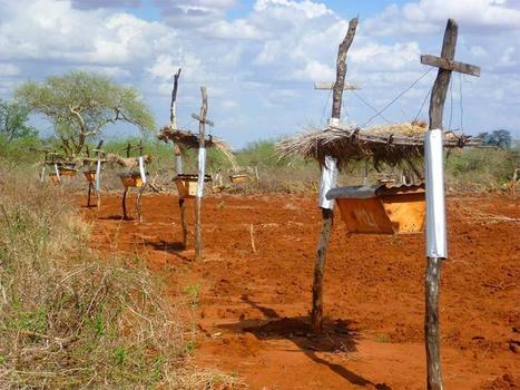 African Farmers Are Setting Up Rows Of Beehives By Their Land, But It's Not Because They Want Honey | Organic Farming | Scoop.it