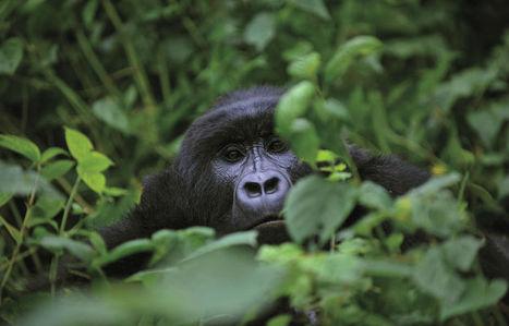 Le pétrole en Afrique Centrale, quels problèmes pourraient survenir ? | Virunga - WWF | Scoop.it