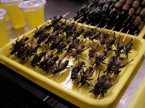 Upgrade your diet | Entomophagy: Edible Insects... | eating insects = win | Scoop.it