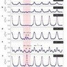 Micro-Nano Electronic for Neuroscience